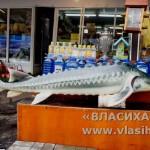Муляж тунца в рыбном магазине